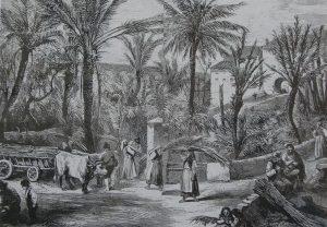 jardin-phoenix-bordighera-recolte-des-palmes-1873